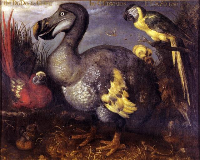 Dodo bird painting