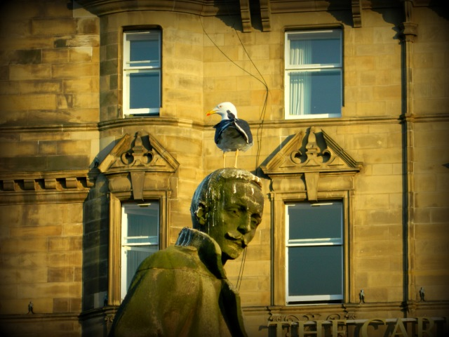 bird shitting on statue