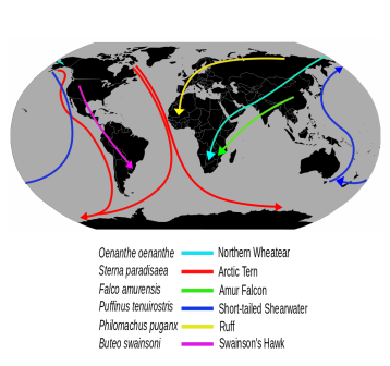 migrating birds routes