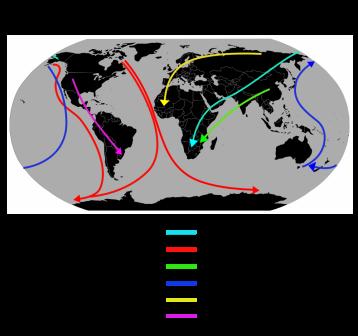 migrating birds routes