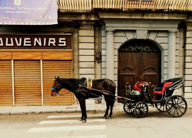 horse Palermo