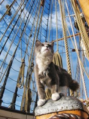 Katze Schiff