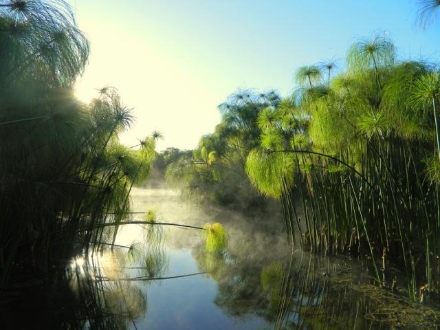 Papyrus Nebel