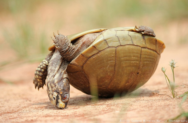 turtle_upside_down