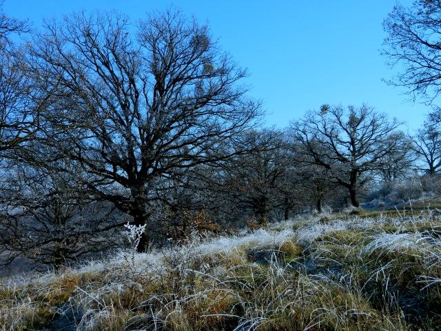 frozen grass 1