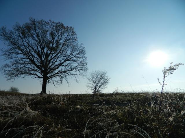 frozen grass 2