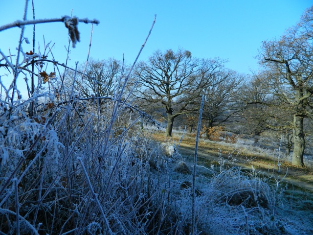 frozen grass 3