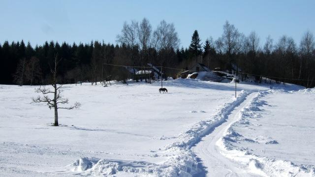 horse in snow 1