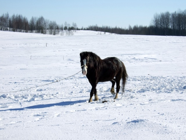 horse in snow 3