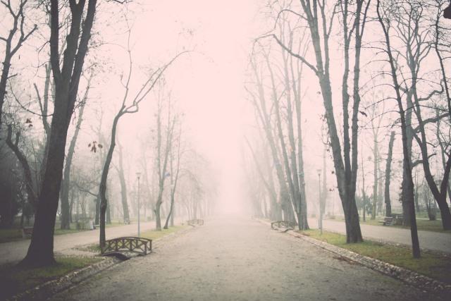 DL Cluj fog 4