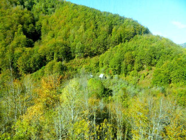 Haus im Wald 1