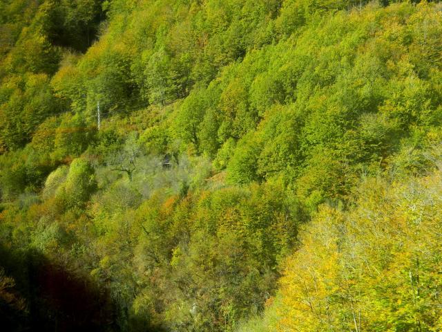 Haus im Wald 2