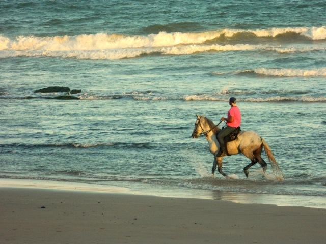 horse beach 1