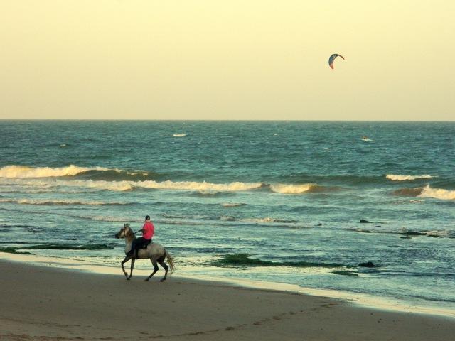 horse beach 2