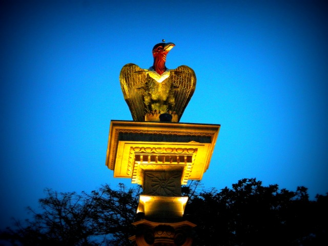 bird-on-bird.JPG