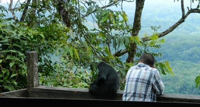 monkey before hugging.JPG