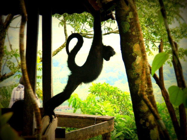 monkey fitness.JPG