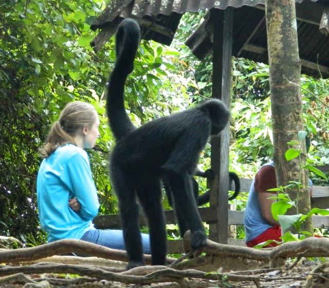 monkey from behind.JPG
