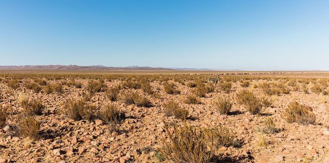 Atamaca desert donkey