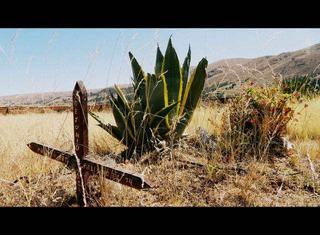 cemetery-cactus-western-001