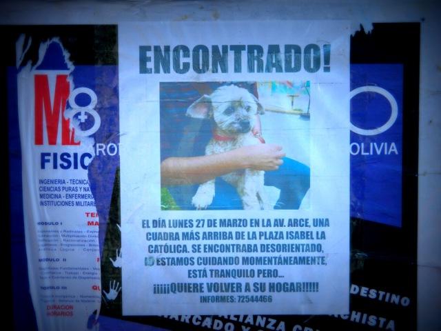 perro poster.JPG