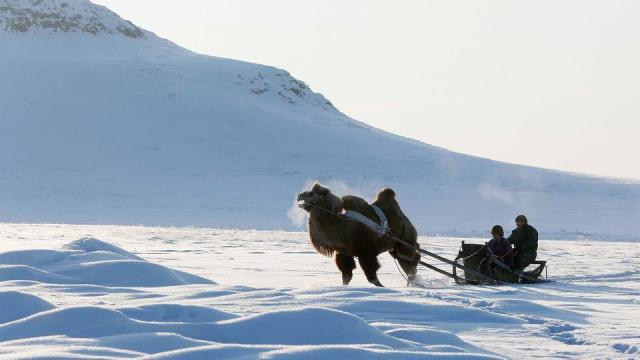 Kamel Schnee.jpg