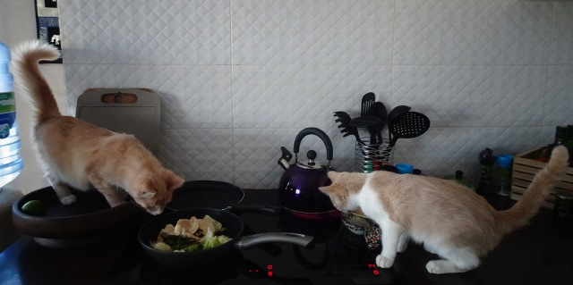 cats cooking