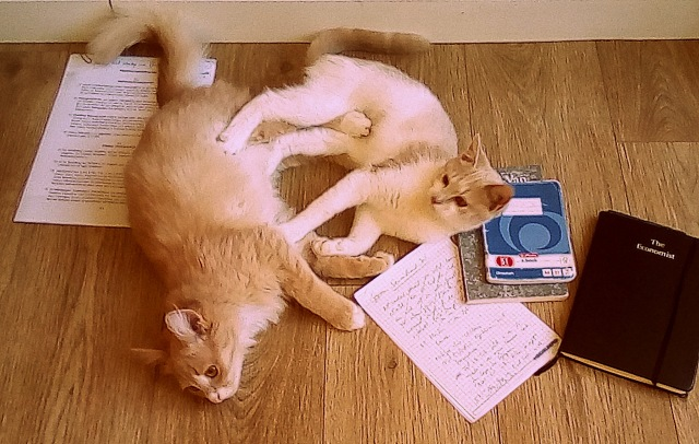 cats fighting over homework