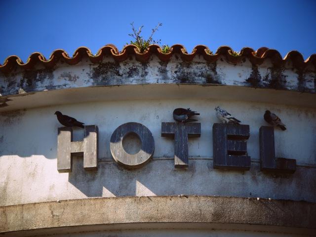 Hotel Pico birds